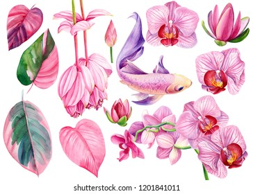 large set of pink flowers lotuses, orchid, ficus leaves and beautiful carp fish, watercolor illustration, hand drawing, collection of elements on an isolated white background