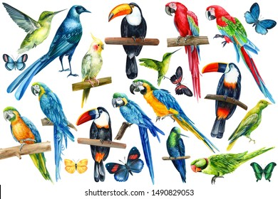 large set of tropical birds on an isolated white background, watercolor illustration. Long-tailed glossy starling, hummingbird, toucan, parrot, butterflies