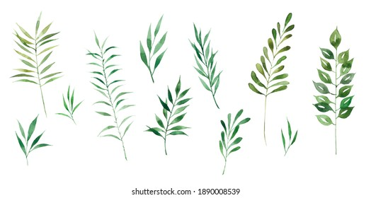 Large watercolor set of green herbs. Ideal for decoration