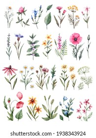 Large watercolor set of wildflowers. Chamomiles, poppies, bells, cornflowers, tansy, buttercups and other wild flowers isolated on white background. Botanical illustration, floral set.