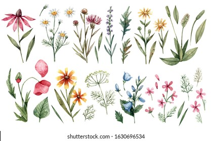Large watercolor set of wildflowers hand-drawn isolated on a white background. Watercolor flowers and herbs in vintage style.
