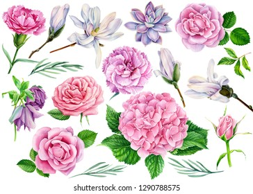 larger set of flowers, carnation, succulent, hellebore, magnolia, hydrangea, pink rose with green leaf, beautiful flower on a white background, watercolor illustration, botanical painting