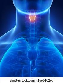 Larynx x-ray anatomy blue