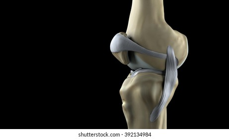lateral knee
