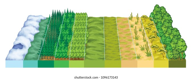 Latitudinal zonation of vegetation, vegetation zonation in latitudinal plan, the main biomes display zonation in relation to latitude and climate.