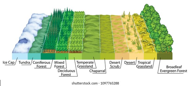 Latitudinal zonation of vegetation, vegetation zonation in latitudinal plan, the main biomes display zonation in relation to latitude and climate