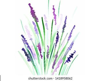 Lavender Bush Blossom Watercolor Illustration