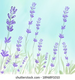 Lavender card perple watercolor. Provence flowers banner backgrounds.