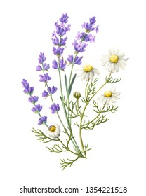 Lavender and Chamomile Bouquet Pencil Drawing Isolated on White