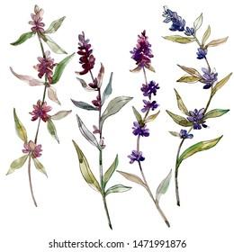 Lavender floral botanical flowers Watercolor background illustration set