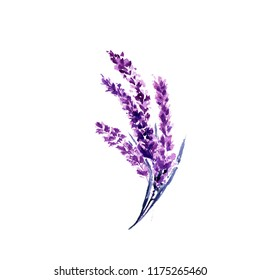 Lavender flower watercolor illustration. Straight lavender branch. Wedding and Valentine's day greeting cards floral design. Love and marriage. Single lavender twig. Isolated raster
