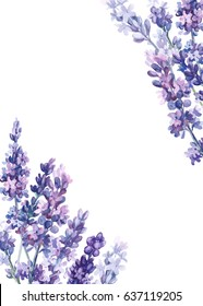 Lavender flowers on isolated white background, watercolor, with space for text