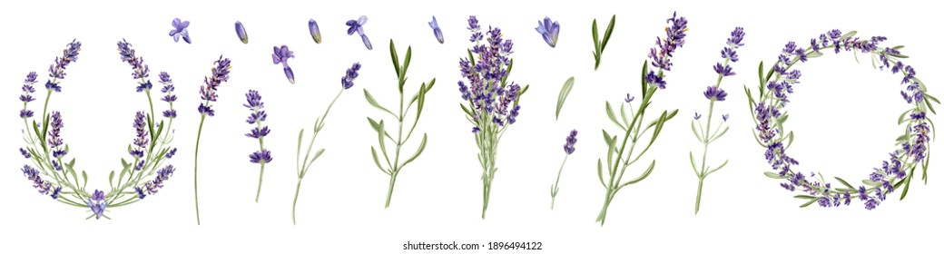 Lavender flowers set isolated on white background. Watercolor botanical illustration. Bouquet, branch, wreath, card