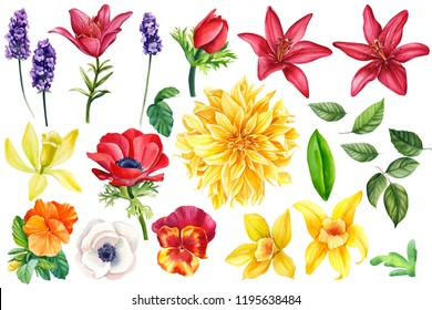 lavender, red anemones, lilies, pansies, vanilla, leaves, dahlia, a large collection of colorful flowers on an isolated white background, botanical painting, watercolor illustration, hand-drawing,