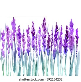 lavender watercolor illustration. Decorative paint background of violet blossom flower  for greeting cards, invitations