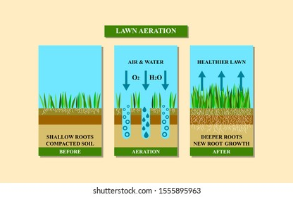 Lawn aeration illustration. Before and after aeration: gardening, lawn grass care service, landscape design. Benefits, advangages of aeration.  is isolated on white background. Raster version.