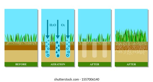 Lawn aeration illustration. Before and after aeration: gardening, lawn grass care service,landscape design. Benefits, advangages of aeration. llustration is isolated on white background.Raster version