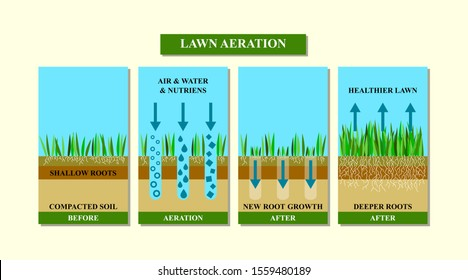 Lawn aeration illustration. Before and after aeration: gardening, lawn grass care service, landscape design. Benefits, advangages of aeration. Illustration is isolated on white background. Raster.