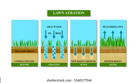 Lawn aeration illustration.Before and after aeration: gardening,lawn grass care service,landscape design. Benefits, advangages of aeration. Illustration is isolated on white background.Raster version.