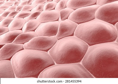 Layer of cells, 3D illustration