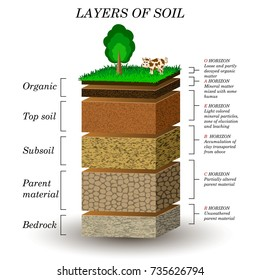Layers of soil, education diagram. Mineral particles, sand, humus and stones, natural fertilizer. Template for banners, page, posters, illustration.