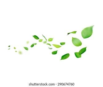 The leaf flows