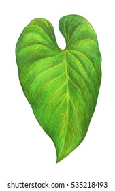 Colored Pencil Drawing Tropical Leaf Images Stock Photos Vectors Shutterstock