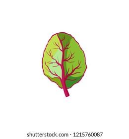 Leaf of lettuce. Appetizing vegetable icon.