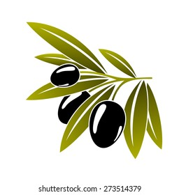 Leafy green twig with three healthy ripe black olives isolated on white in cartoon style