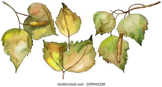 Leaves Birch in a watercolor style isolated. Aquarelle leaf for background, texture, wrapper pattern, frame or border.