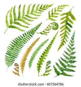 Leaves fern watercolor. Set of green branches on a white background.