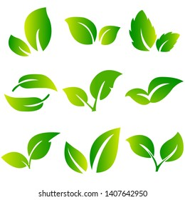 Leaves icon set isolated on white background. Various shapes of green leaves of trees and plants. Collection of green symbols isolated on a white background