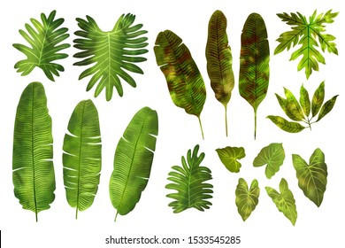 Leaves of tropical plants in green watercolor on a white background. Mango, banana leaves, palm