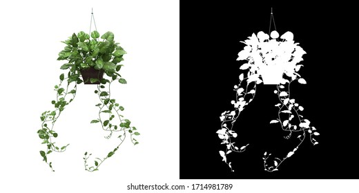 Left view of decorative plant png alpha channel cutout 3D rendering