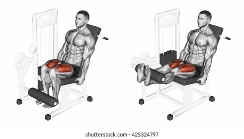 Leg extension in the simulator on quadriceps. 3D illustration