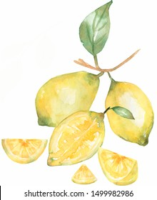 Lemon branch with citrus fruit,flowers and leaves. Watercolor hand drawn illustration