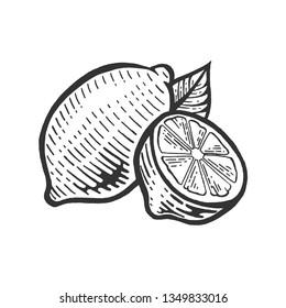 lemon citrus fruit sketch engraving raster illustration. Scratch board style imitation. Black and white hand drawn image.