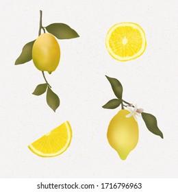 Lemon illustration clip art summer fresh lemon slice citrus fruit