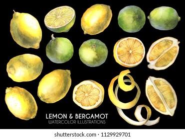 Lemon illustration. Lemon slice. Fruits set.