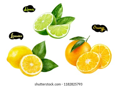 Lemon lime orange watercolor hand drawn illustration set
