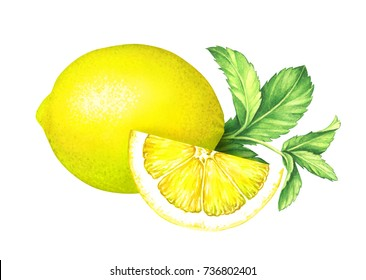 Lemon with mint leaves on white background. Hand drawn watercolor illustration.