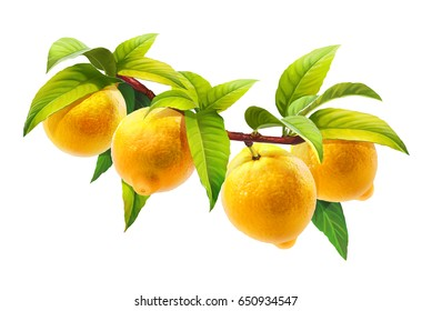 Lemon on a branch with leaves, isolated on white