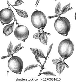 Lemon seamless pattern drawn with Graphite Pencil. Lemon branches pencil drawing. Vintage italian lemons print design. Fabric and wallpaper design. Graphite pencil lemons drawing