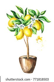 Lemon  tree with fruit and leaves.  Watercolor hand drawn vertical illustration