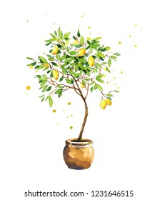 Lemon tree, watercolor sketch