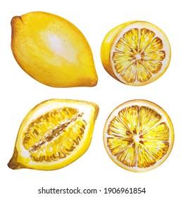 Lemon watercolor illustration. Yellow lemons, Watercolor style. Lemons isolated. Citrus watercoulor illustration
