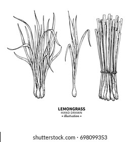Lemongrass drawing. Isolated vintage illustration of leaves. Organic essential oil engraved style sketch. Beauty and spa, cosmetic and tea ingredient. Great for label, poster, flyer, packaging design.
