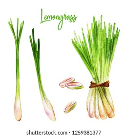 Lemongrass with slices, watercolour illustration, hand drawn