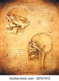 leonardo da vinci antomy skull