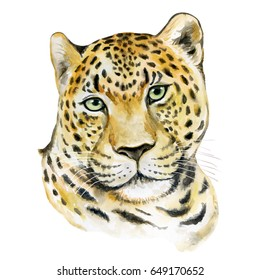 Leopard isolated on white background. Watercolor. Illustration. Template. Portrait